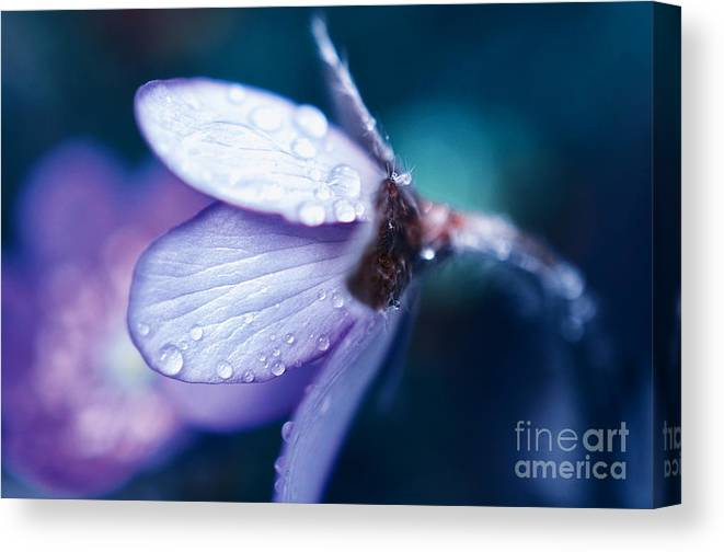 Happy Canvas Print featuring the photograph Blue Beauty In The Morning by Sabine Jacobs