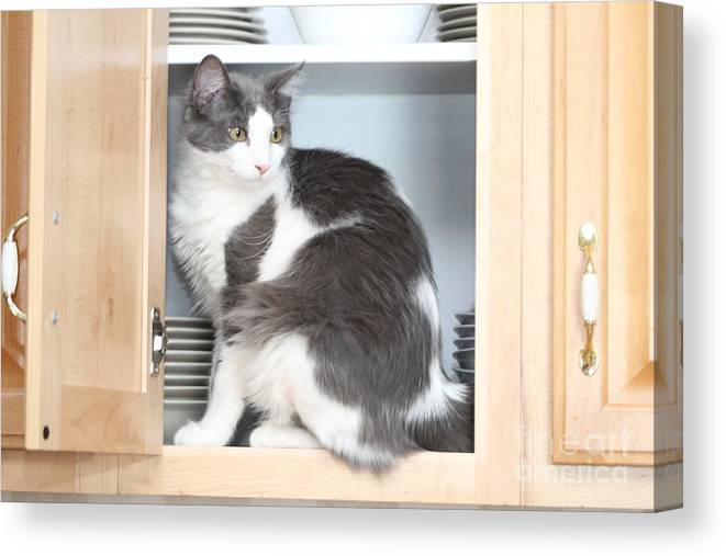 Cat Canvas Print featuring the photograph Cabinet Cat by Michelle Powell