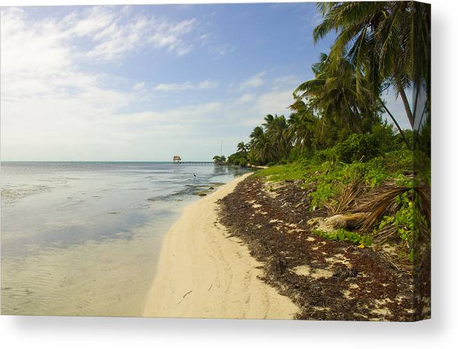 Belize Canvas Print featuring the photograph Caribbean Beach In Ambergris Caye Belize by Brandon Bourdages