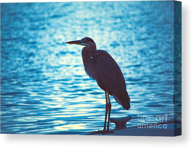 Bird Canvas Print featuring the photograph Carribean Light by Loretta Jean Photography