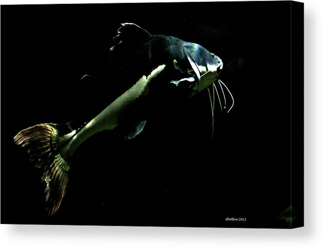Zoo Canvas Print featuring the photograph Catfish Are Jumpin by Dick Botkin