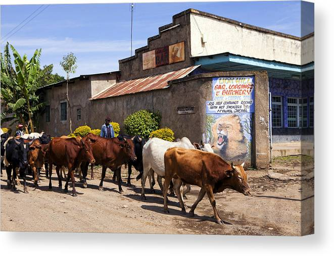 Africa Canvas Print featuring the photograph Cattle Drive by Wendy White