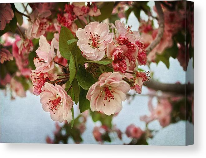 Floral Canvas Print featuring the photograph Cherry Blossom Pink by Terry Fleckney
