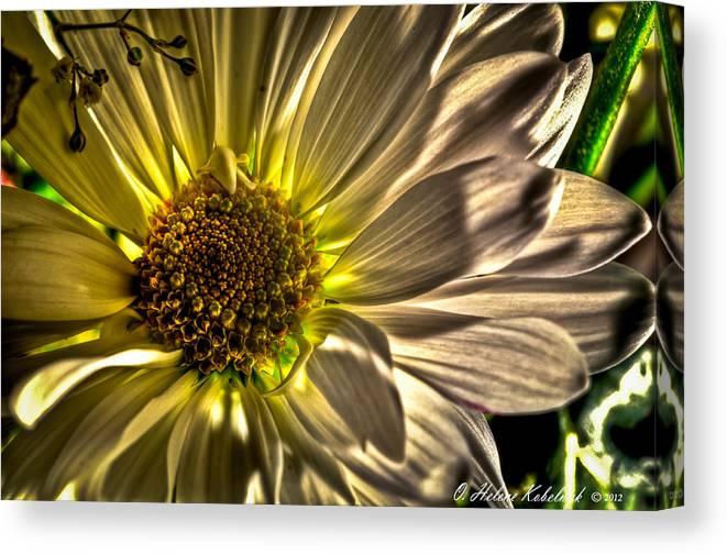 Mum Canvas Print featuring the photograph Chrysanthemum by Helene Kobelnyk