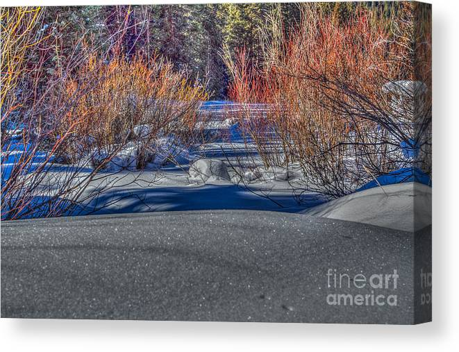 Landscape Canvas Print featuring the photograph Colorful Despite Snow by Franz Zarda