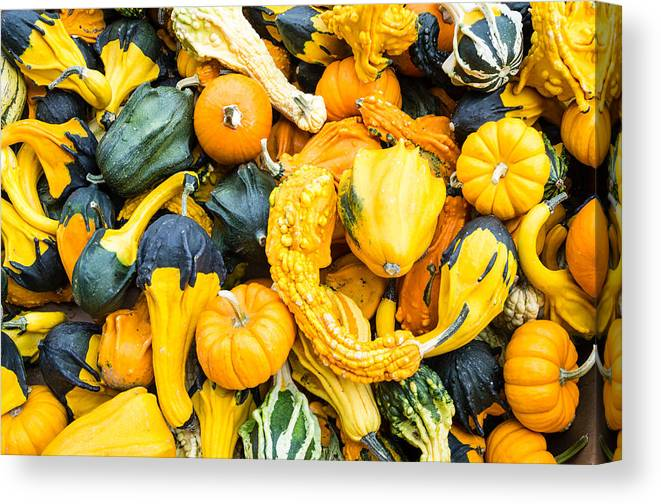 Agriculture Canvas Print featuring the photograph Colorful Gourds by John Trax