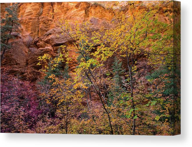 Photography Canvas Print featuring the photograph Colorful Leaves On A Tree by Panoramic Images
