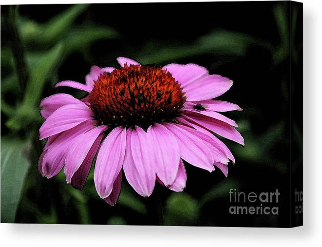 Coneflower Canvas Print featuring the photograph Coneflower With Bug by Christiane Schulze Art And Photography