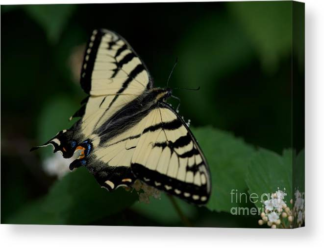 Butterflies Canvas Print featuring the photograph Covered by Joseph Yarbrough