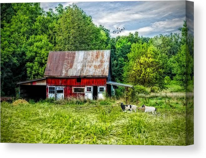Lamb. Sheep. Red Barn. Vintage Barn. Architecture. Trees. Woods. Forest. Grasses. Cloudy Sky. Photography. Print. Canvas. Fine Art. Digital Art. Texture. Landscape. Spring. Summer. Wildlife. Nature. Birds. Ducks. Mallards. Geese. Pasture. Canvas Print featuring the photograph Curious Little Lambs by Mary Timman