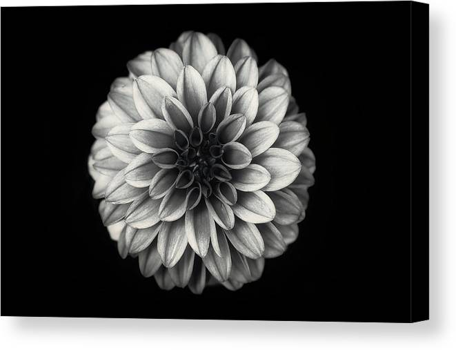 Flower Canvas Print featuring the photograph Dahlia by Lotte Gr?nkj?r