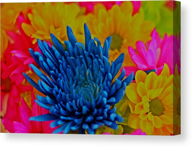 Beautiful Flowers Photograph Canvas Print featuring the photograph Dash Of Blue by Dan Sproul
