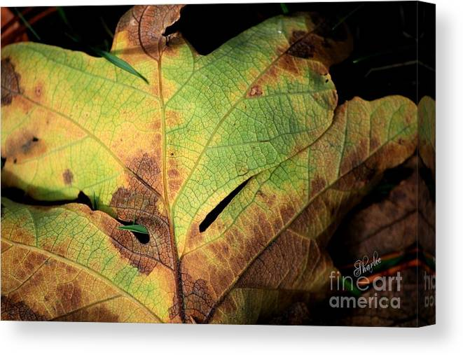 Fall Leaf Canvas Print featuring the photograph Death Of A Leaf by Sharon Johnston