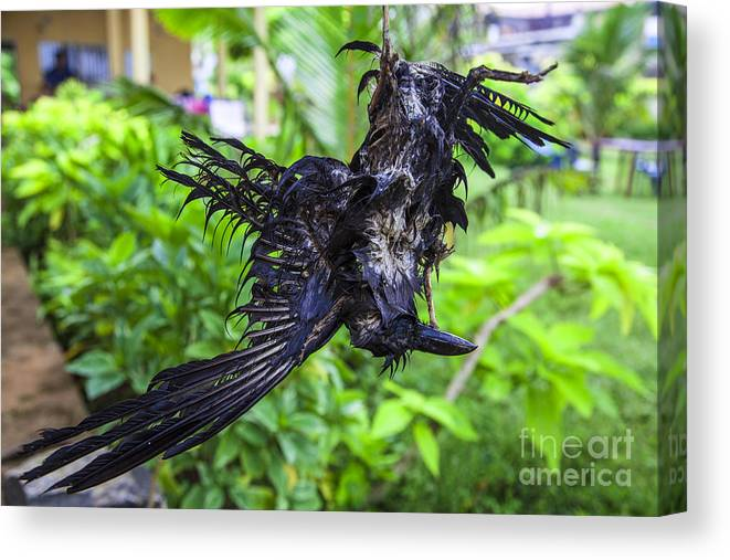Death Canvas Print featuring the photograph Death Raven Hanging In The Rope by Gina Koch