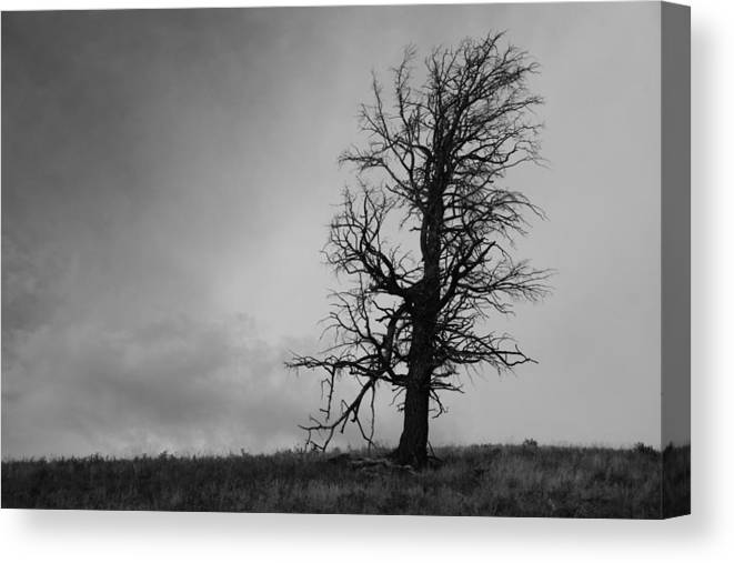 Tree Canvas Print featuring the photograph Desolation by Paul Conner