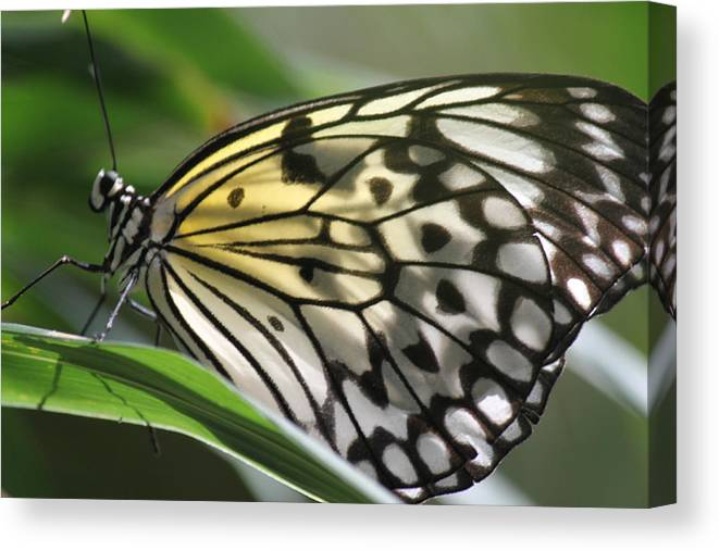 Butterfly Canvas Print featuring the photograph Detail Beauty by Ronald Lake