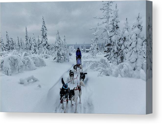 Working Animals Canvas Print featuring the photograph Dogsledding Through The Forest by Johnathan Ampersand Esper