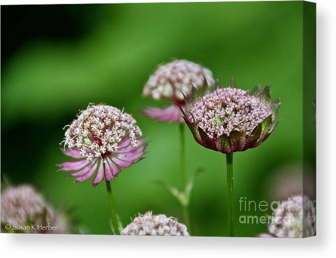 Flower Canvas Print featuring the photograph Dreamscape by Susan Herber