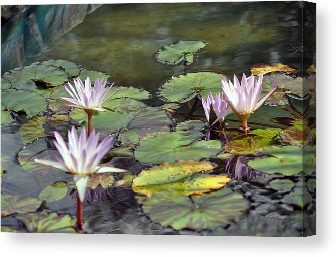 Flowers Canvas Print featuring the photograph Dreamy Water Lillies by Judith Russell-Tooth
