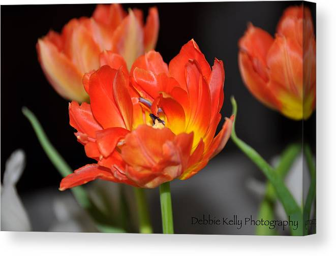 Tulips Canvas Print featuring the photograph Easter Parrot Tulips by Debbie Kelly