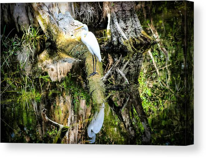 Egret Canvas Print featuring the photograph Egrets Reflection by George Kenhan