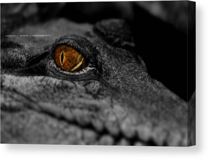 Crocodile Canvas Print featuring the photograph Eyes For You by Andrew Prince