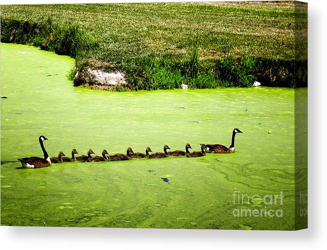 Nature Canvas Print featuring the photograph Family Outing by Gerlinde Keating - Galleria GK Keating Associates Inc