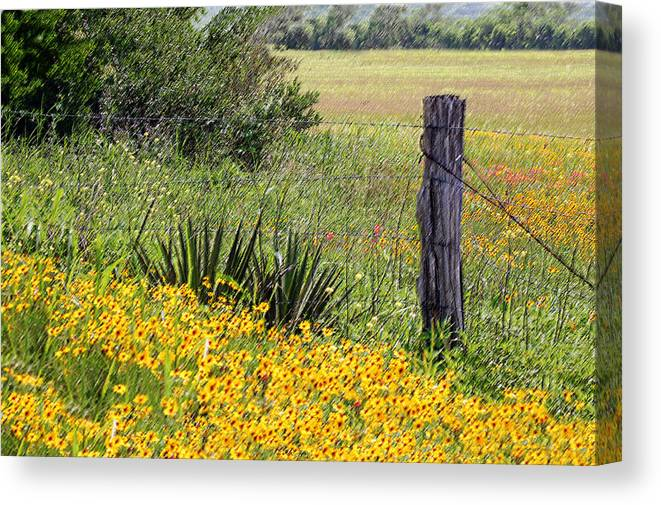 Fence Canvas Print featuring the photograph Field Of Flowers by Leticia Latocki