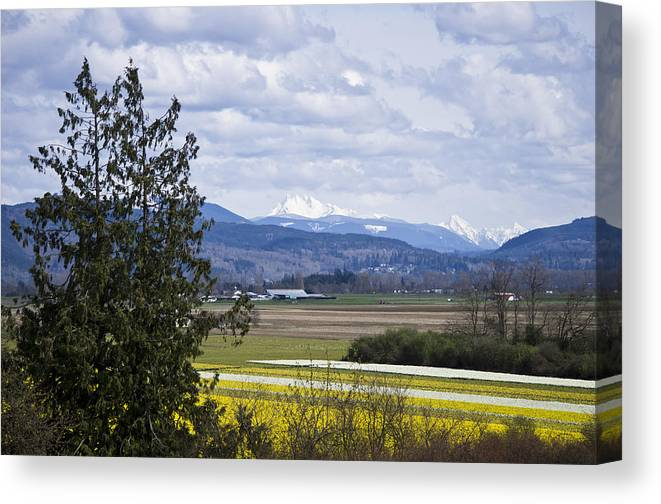 Daffodil Canvas Print featuring the photograph Fields Of Spring by Priya Ghose