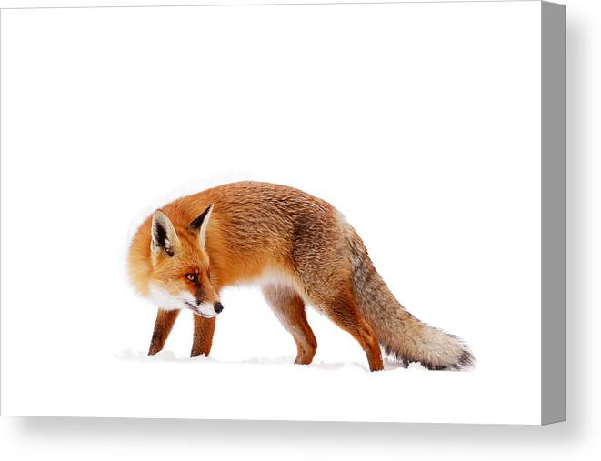 Fox Canvas Print featuring the photograph Fire 'n Ice by Roeselien Raimond