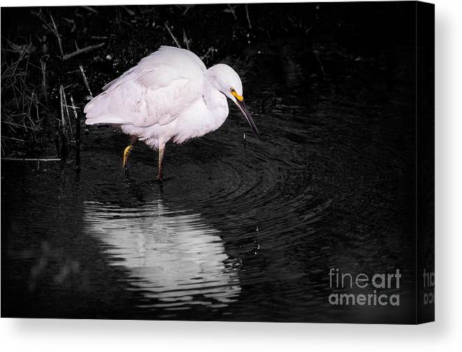 Snowy Canvas Print featuring the photograph Florida Snow In Black And White by Photos By Cassandra