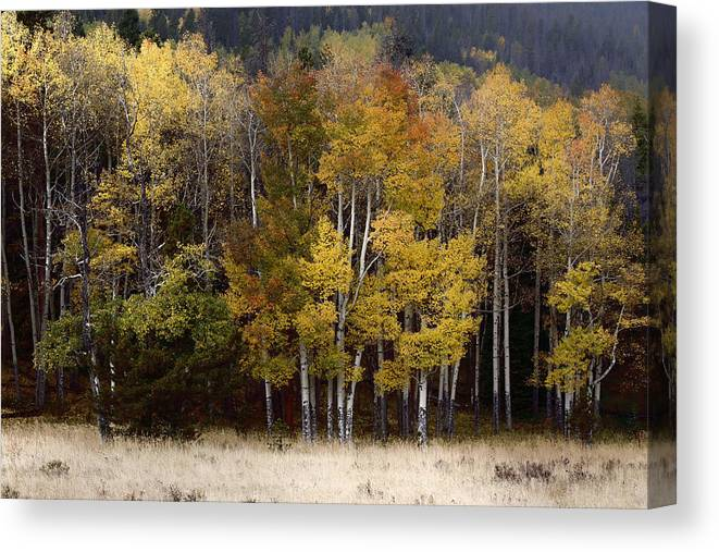 Forest Canvas Print featuring the photograph Forest Colors by Lynn Sprowl