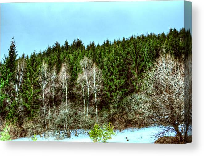 Forest Canvas Print featuring the photograph Forest Next Door II by Aia Ranguelova