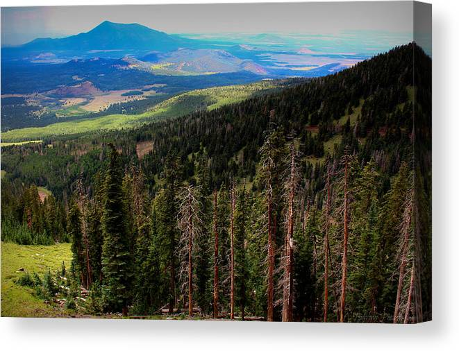 Flagstaff Canvas Print featuring the photograph Forested Volcanic Slopes by Aaron Burrows