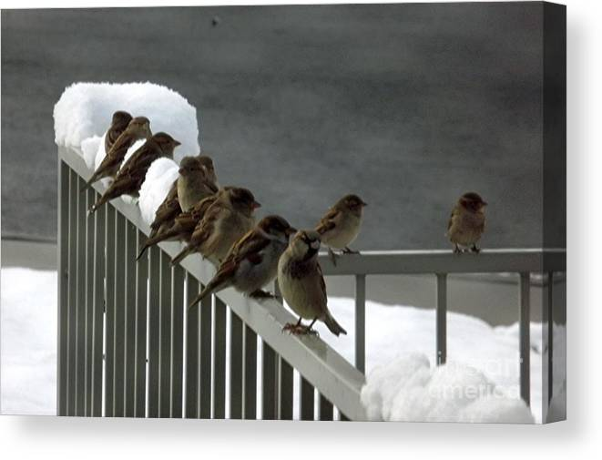 Brids Canvas Print featuring the photograph Fowl Weather Friends by Jill Tucker