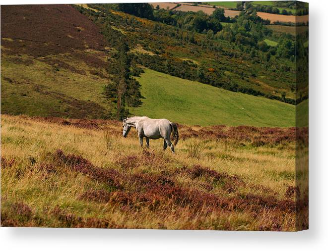 Horse Canvas Print featuring the photograph Freedom by Szalonaisa Photography