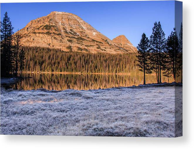 Gigimarie Canvas Print featuring the photograph Frosty by Gina Herbert