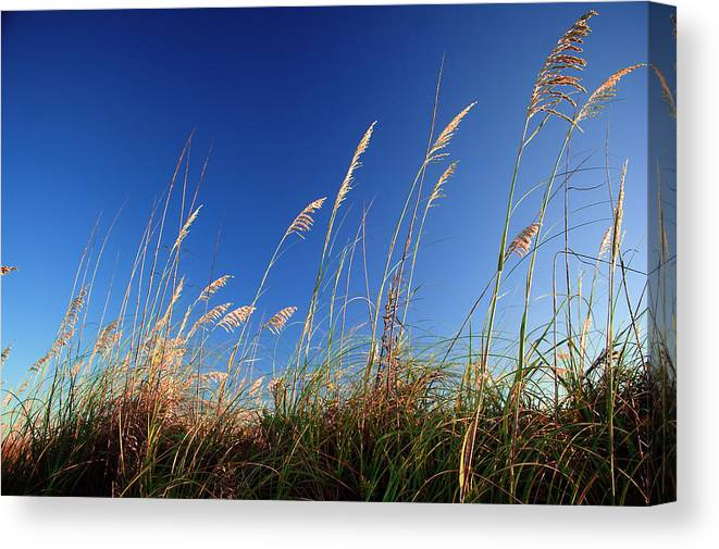 Grain Canvas Print featuring the photograph Golden Bliss by Jerry Cutshall