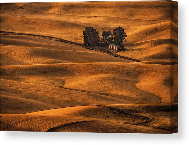 Palouse Canvas Print featuring the photograph Golden Field by Lydia Jacobs