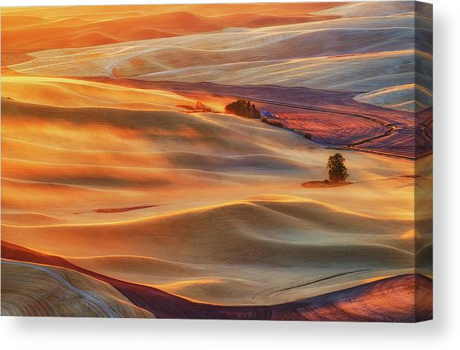 Gold Canvas Print featuring the photograph Golden Palouse by Lydia Jacobs