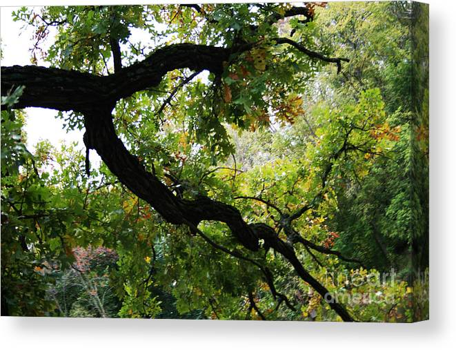 Jamie Lynn Gabrich Canvas Print featuring the photograph Green Days by Jamie Lynn