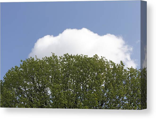 Tree Canvas Print featuring the photograph Green Tree Stands Out Against The Blue Sky by Ronald Jansen