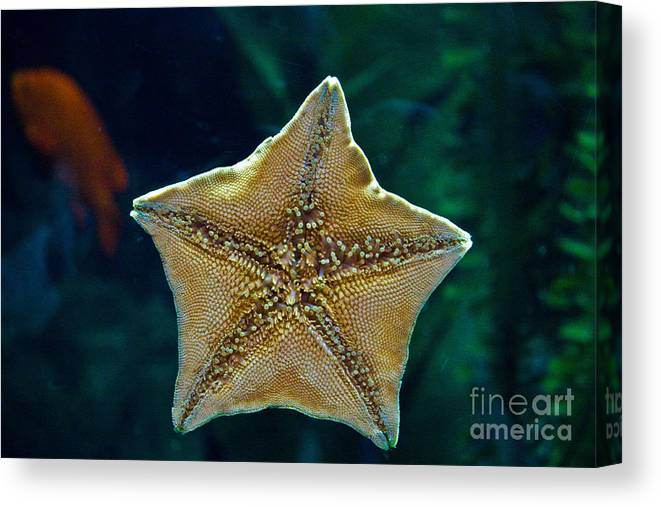 Star Fish Canvas Print featuring the photograph Has Anyone Seen Nemo by Bob McGill