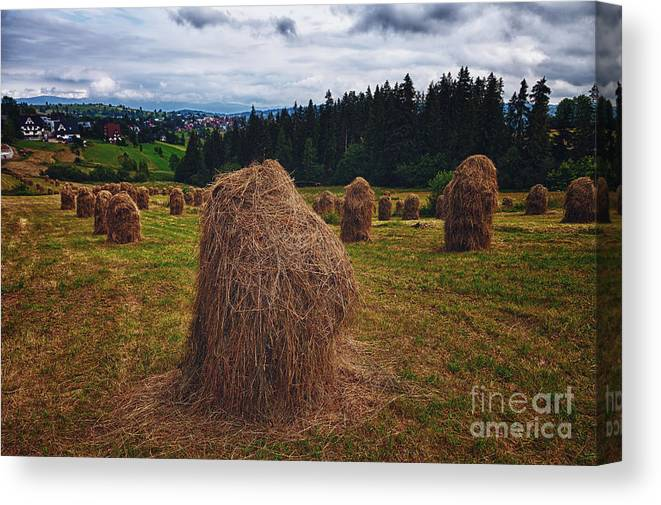 Agricultural Canvas Print featuring the photograph Hay In Stacks In Tatra Mountains Poland by Frank Bach