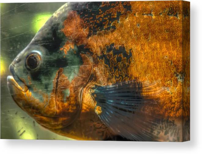 Hdr Fish Canvas Print featuring the photograph Hdr - Fish by Dem Wolfe