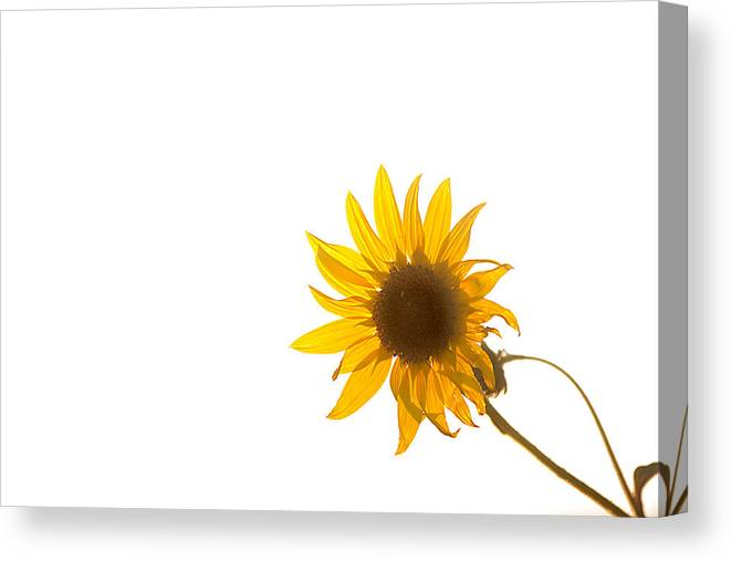 California Canvas Print featuring the photograph Hello Yellow by Peter Tellone