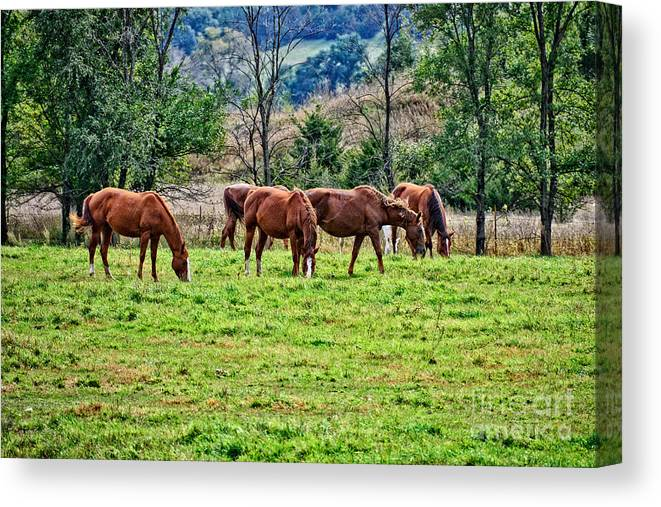 South Dakota Canvas Print featuring the photograph Horses Grazing by M Dale