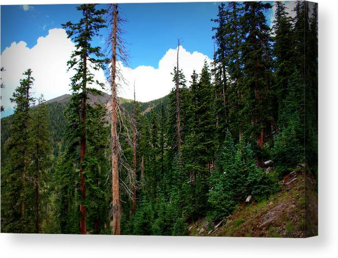 Flagstaff Canvas Print featuring the photograph Humphreys Subalpine Slopes by Aaron Burrows