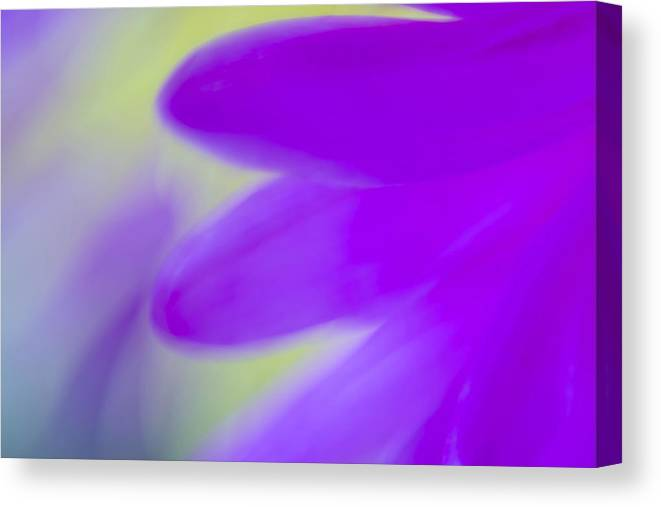 Nature Abstract Canvas Print featuring the photograph I Am A Flower by KM Corcoran