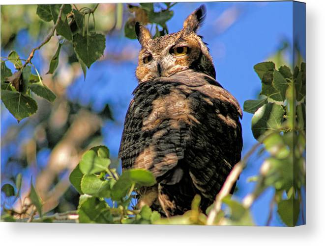 Owl Canvas Print featuring the photograph I See You by Tammy Espino